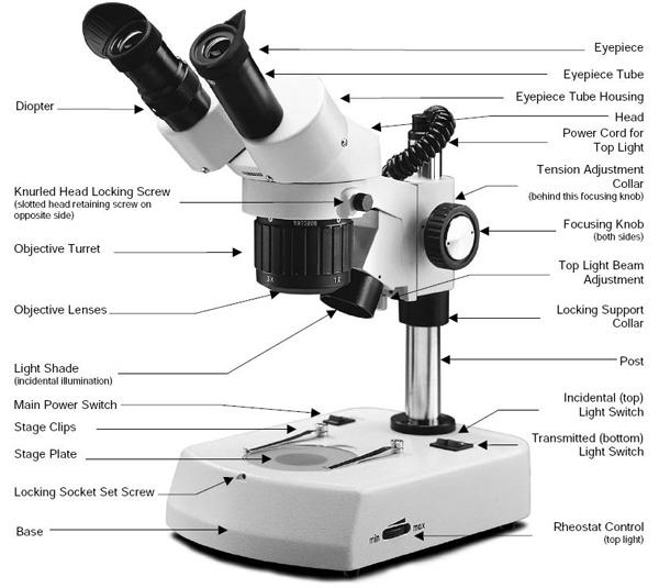 Choosing A Microscope