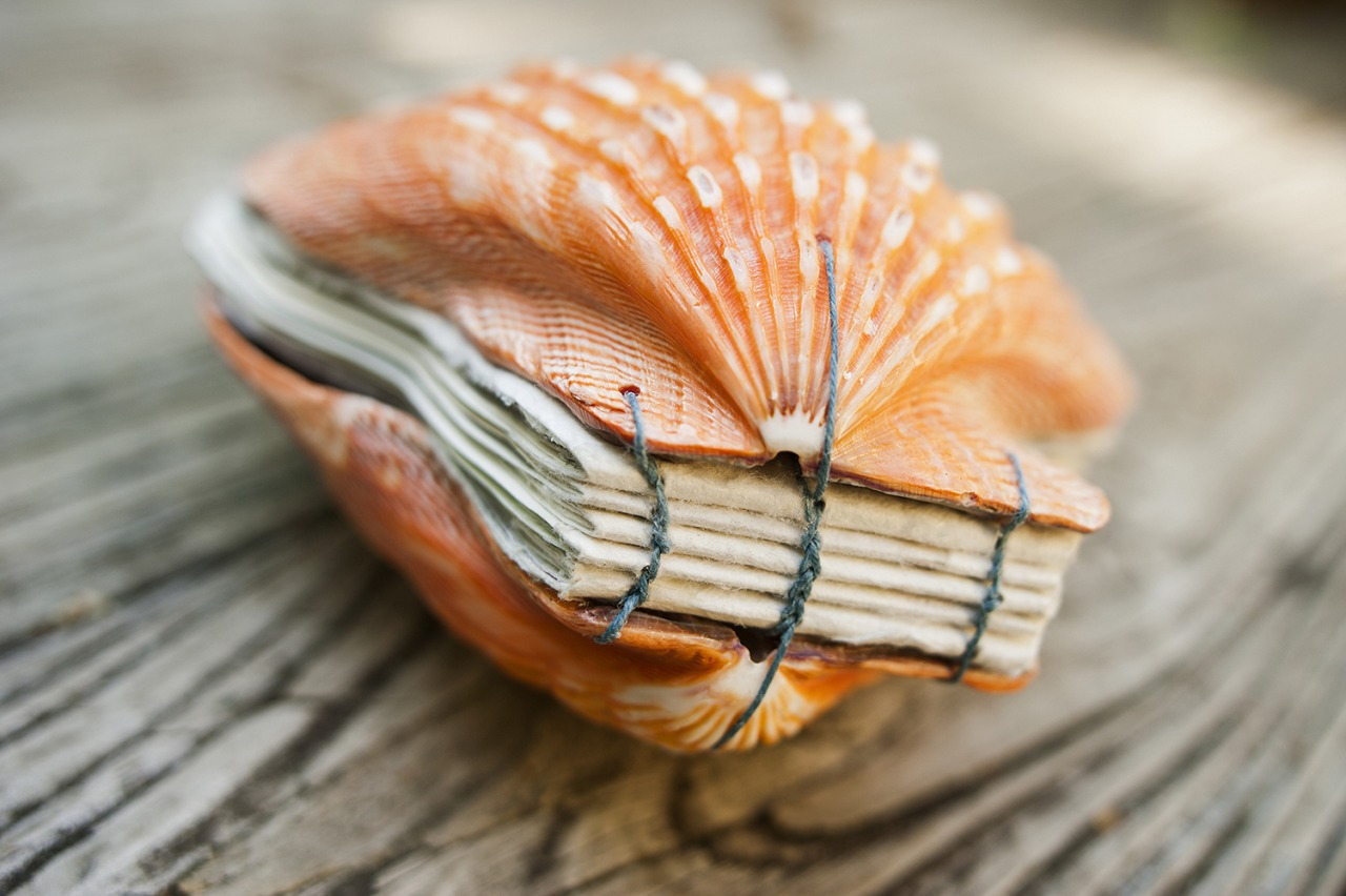 Artist 39 s book made from seashells make for What are shells made of