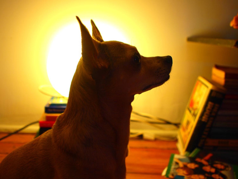 Silhouette Dog Portrait Using Illustrator Make: